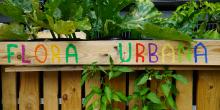 FlorA Urbana Logo